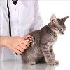 Ветеринарные клиники в Городце